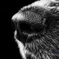 Enfermedad del moquillo canino - Valencia hospital veterinario constitución