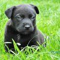Parvovirosis canina - Valencia hospital veterinario