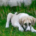 Eccema perros y gatos - Valencia hospital veterinario