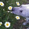 Dermatitis perros y gatos por alergias - Valencia hospital veterinario constitucion