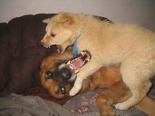 Psicologoia canina y felina - hospital veterinario constitucion