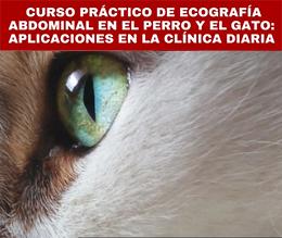 Curso ecografía abdominal perro y gato - Hospital Veterinario Constitución