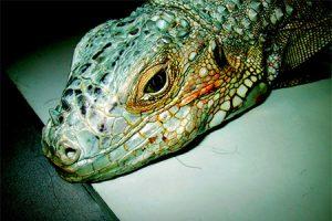 Animal exotico - hospital veterinario constitucion