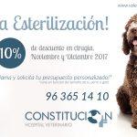 Promoción campaña de esterilización – ¡10% Descuento!