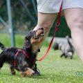 Adiestramiento perros valencia - Hospital veterinario constitucion