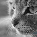 55 Curiosidades sobre los gatos