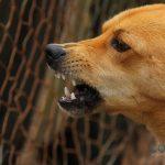 ¿Por qué es importante vacunar a tu perro contra la rabia?