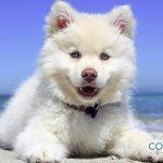 Accidentes más comunes en los perros