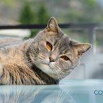 Consejos para educar a un gato