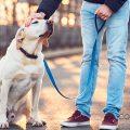 Perros abandonados desfilarán para ser adoptados en el Bioparc