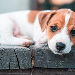 Consejos para educar a un perro cachorro