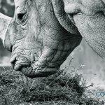 Las personas hemos exterminado en 40 años a un 60% de los animales del planeta