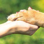 Los suelos calientes son peligrosos para las patas de los perros