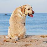 Playas para ir con perros en la Comunidad Valenciana