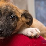 Cómo adoptar un perro de una protectora de animales