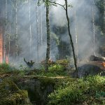 ¿Cómo afecta el incendio del Amazonas a los animales?