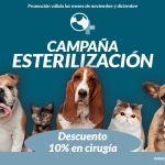 Campaña de esterilización 2019
