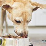 ¿Cuáles son los alimentos prohibidos para los perros ?