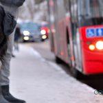 Las mascotas ya pueden viajar en el autobús de la EMT de Valencia con un bono personalizado