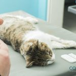Importancia de la prevención y realización de analíticas en tu mascota