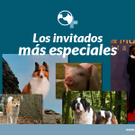 Gala de los Oscar con invitados muy especiales ¡los animales más famosos!