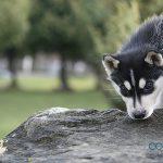 ¿Por qué mi perro come piedras?