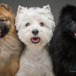 Mantener el bienestar de las mascotas durante la cuarentena por el COVID-19