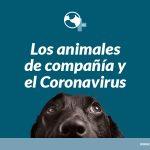 Los animales de compañía y el COVID-19 (Coronavirus)