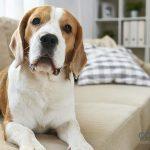 Razas de perro para un piso