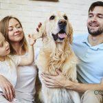 Consejos para cuidar a tus mascotas en vacaciones