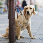 ¿Qué podemos hacer si encontramos un perro abandonado?