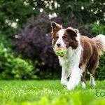 Decálogo de la tenencia responsable de animales de compañía