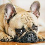 El síndrome postvacacional en perros