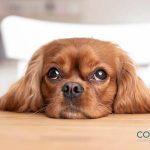 La nariz de los perros equivale a su huella dactilar