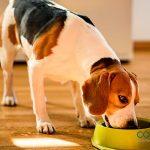 Cambio de pienso: métodos infalibles para mascotas