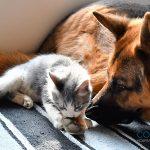 Campaña de esterilización, 10% en esterilización de perros y gatos
