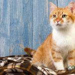 ¿Por qué los gatos tienden a amasar?