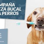 Campaña limpieza dental