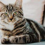 Las enfermedades de gatos más comunes