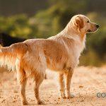 Microchip en perros: ¿Qué es y por qué es obligatorio?