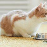 ¿Qué no debe comer un gato?