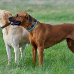 Consejos para que tu perro socialice