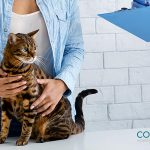 Enfermedades que afectan a tu gato