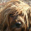 Cuidado enfermedades de la piel y el pelo perros y gatos - Valencia hospital veterinario
