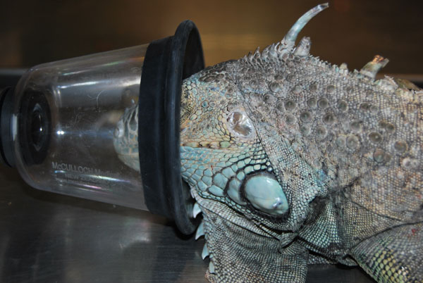 Animales exoticos - hospital veterinario constitucion