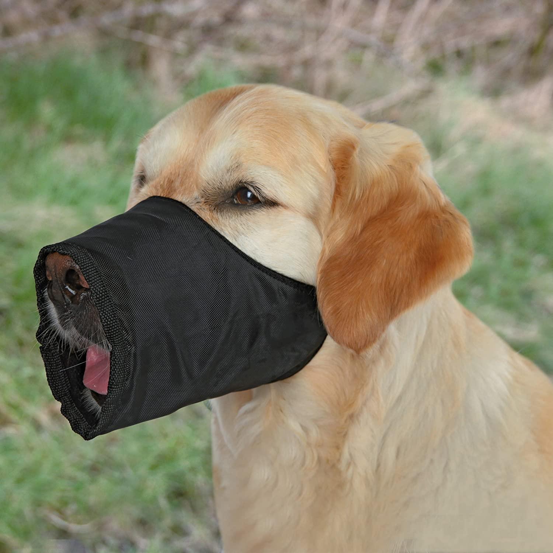 Comparamos los distintos bozales para perros
