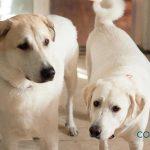 Cataratas en perros ¿A qué se deben?