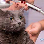 ¿Debes bañar a tu gato?