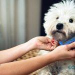 Beneficios del spa canino
