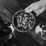 Ventajas de la comida húmeda para gatos